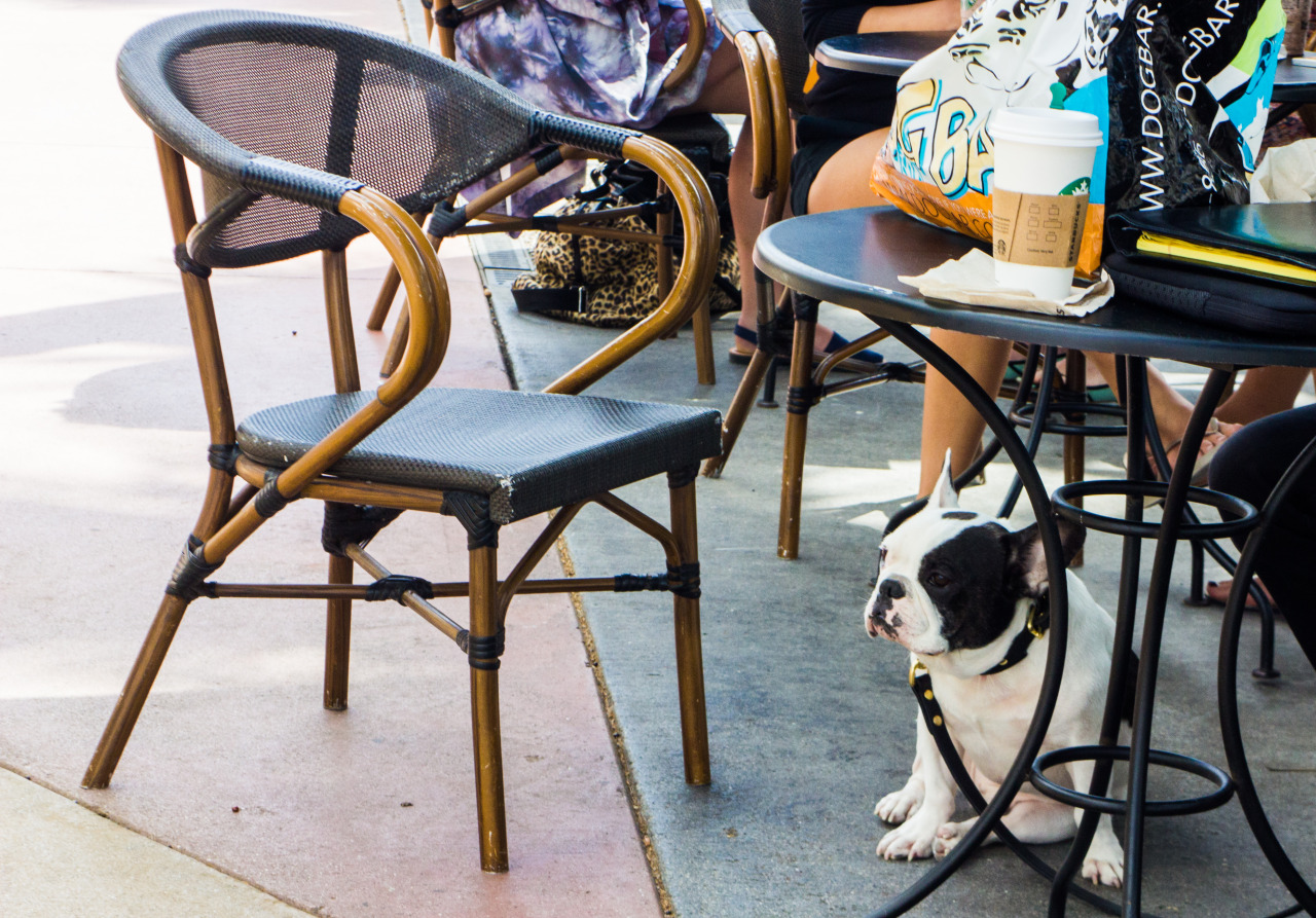 where to take your dog in Florida, dog friendly cities in American south