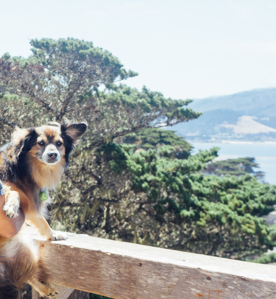 Carmel dogs vacation pets travel July 4 Independence day summer vacation California Monterey Cyprus beach