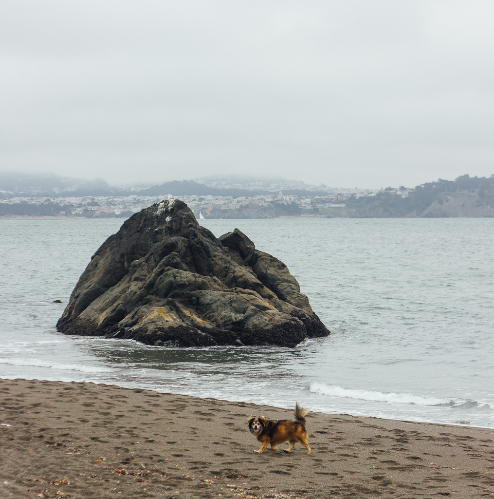 Black sand beach Sausalito Marin California Bay Area