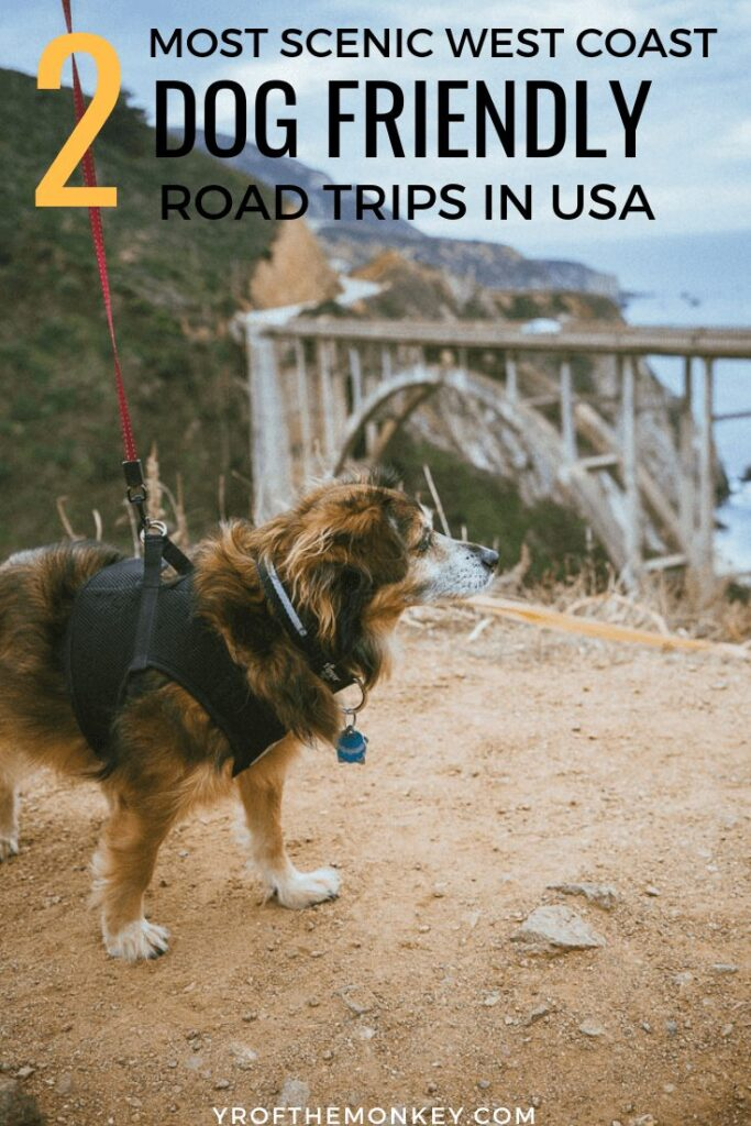 Looking for dog friendly road trips along the Pacific coast? Then read this guide to the best road trips with your dog in Northern California which have spectacular views, dog friendly attractions and stops. Pin this to your pet travel or road trip or California, USA board now #travelwithdogs #petfriendly #dogfriendly #USA #westcoast #Pacific #California #17miledrive #coastalredwoods