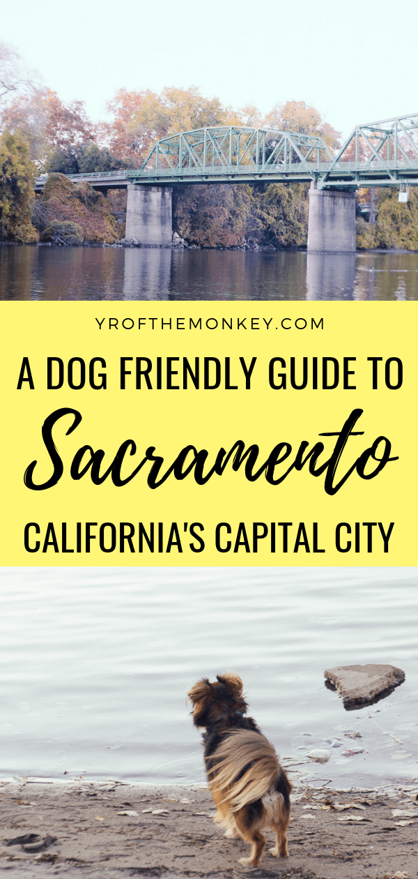 This is a dog friendly guide to Sacramento, USA, the capital of California which is very much under the radar. Discover dog friendly activities, farm to fork dining and dog friendly budget stay option in this post by a seasoned traveling dog mom. Pin this to your California or dog friendly travel board now! #california #sacramento #USA #northamerica #dogfriendly #travelwithdogs #petfriendly #dogfriendlytravel