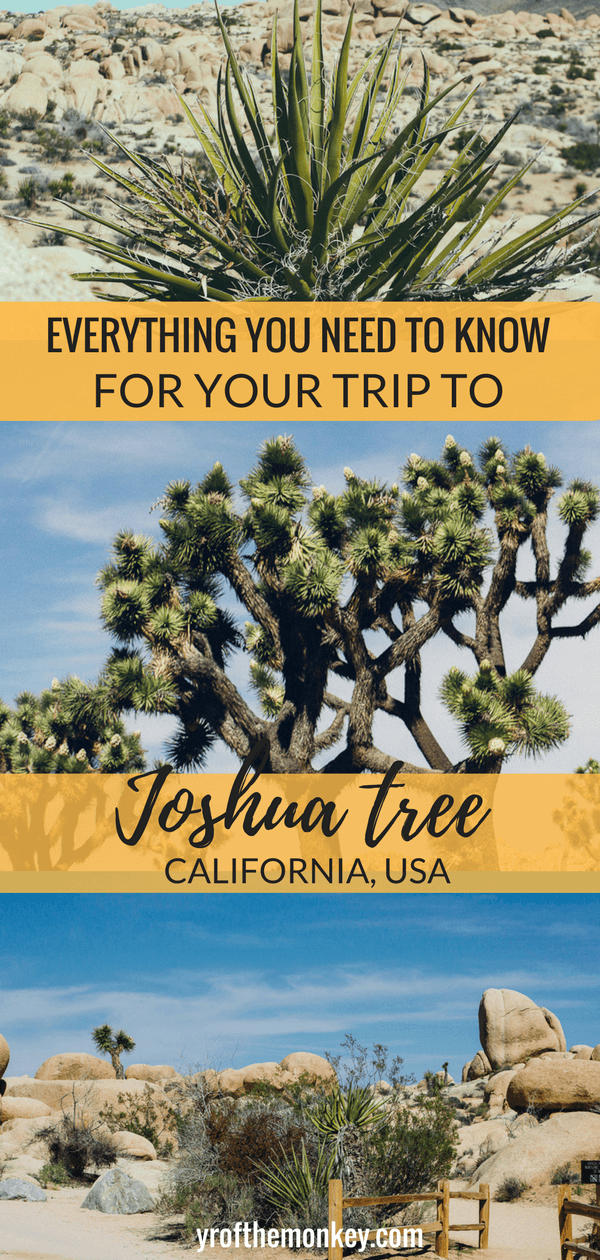 Joshua tree guide is a first time visitors guide to Joshua tree national Park, California, USA. Includes information on best Joshua tree hikes, Joshua tree trails, hotels and restaurants near Joshua tree national Park. Read this guide for a day trip to Joshua tree and pin it to your California board! #joshuatree #california #hiking #nationalparksUSA #USnationalparks
