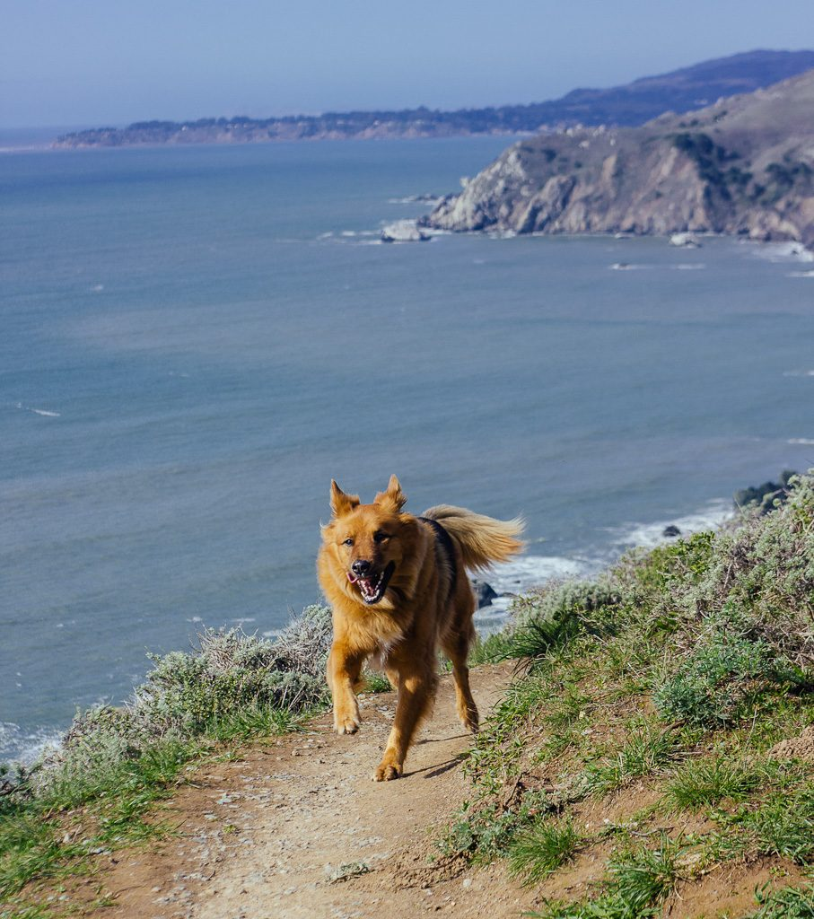 Muir Beach lookout point has one of the best dog hikes in Bay Area