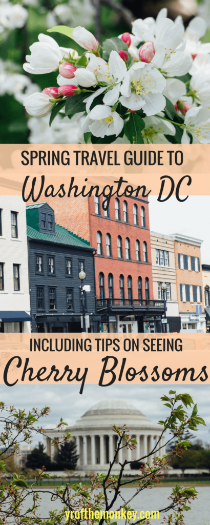 This is a spring travel guide to Washington DC, USA for the Cherry Blossom festival. A guide to best DC sights, activities and tips to see the cherry blossoms. Pin it to your Cherry blossom or USA travel guide #cherryblossoms #washingtondc #USAvacation #cherryblossomfestival #springvacation