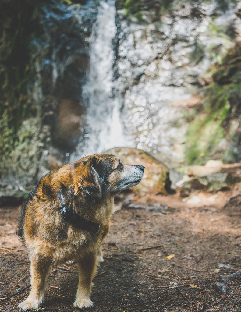 dog friendly day trips from San Francisco, Bay area day trips with dogs