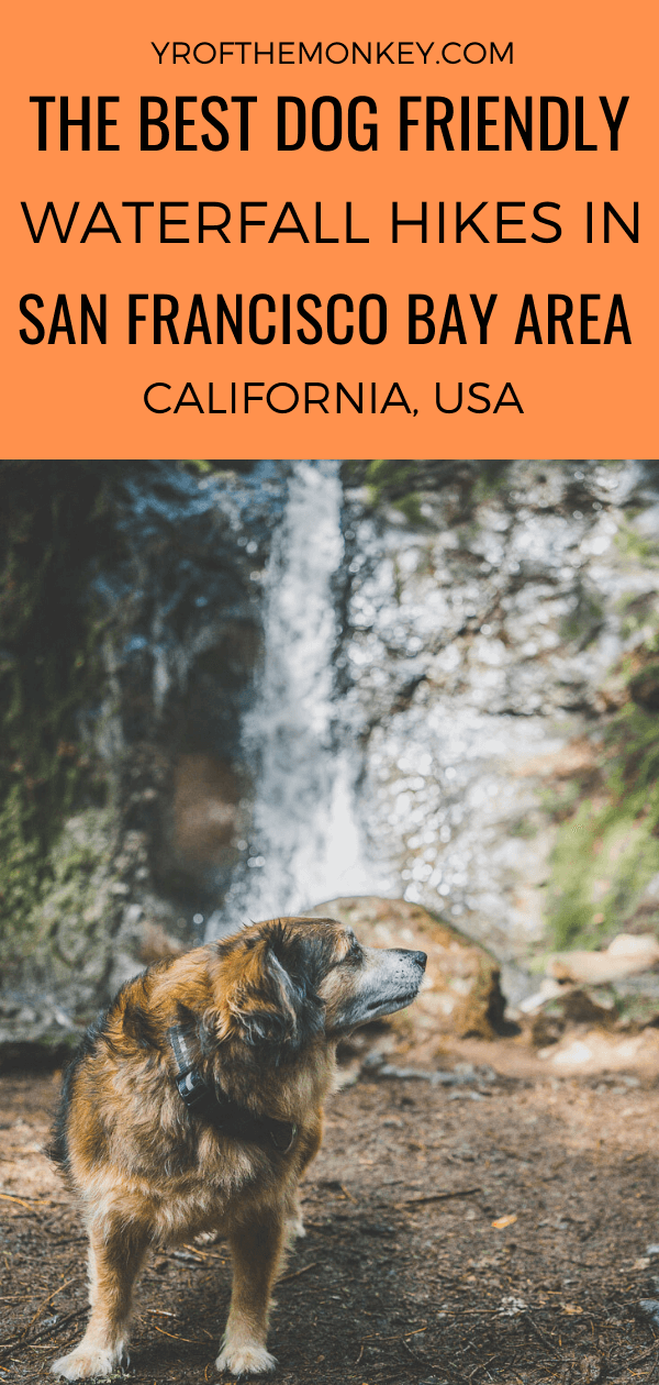 Looking for hikes to gushing waterfalls in the San Francisco Bay Area that are also dog friendly? Then read this dog mom's guide to three such dog friendly hiking trails in SF Bay area that lead to gorgeous waterfalls. #sanfrancisco #sfbayarea #USA #california #dogfriendlyhikes #dogfriendlytravel #hikingwithdogs #dogfriendlyhiking #hikingtrails #bayareahiking #waterfallhikesbayarea