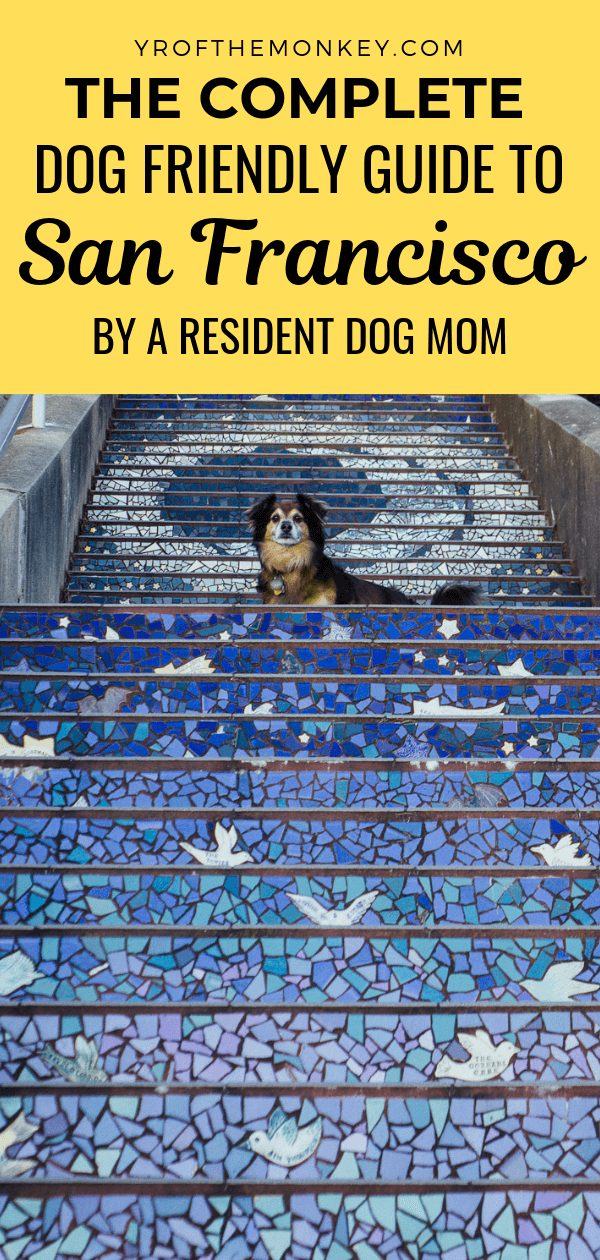 This is a complete guide to dog friendly spots in San Francisco, California, USA by a resident dog mom listing some of the best San Francisco dog parks with stunning views to be enjoyed by human and canine alike! Pin this to your pet friendly travel or San Francisco or California travel board now! #dogfriendlytravel #petfriendlytravel #travelwithdogs #dogs #sanfrancisco #USA #California #dogparks #America #dogfriendly #travelwithdogs