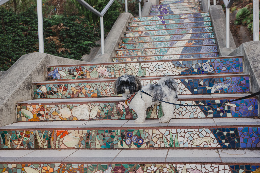 Most dog friendly cities in US, American cities that are dog friendly, dog friendly cities in USA, where to take your dog in USA, 16th street Mosaic steps in San Francisco