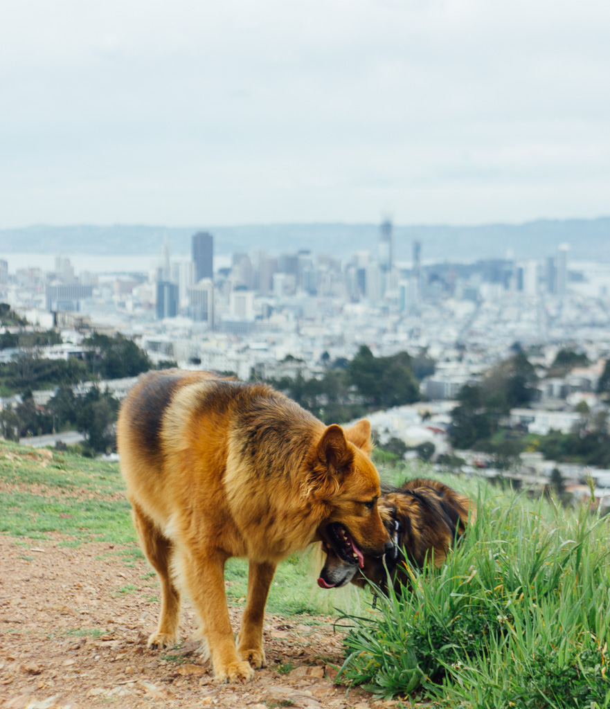 Mt. Davidson park is not only dog friendly but has a panoramic view of San Francisco