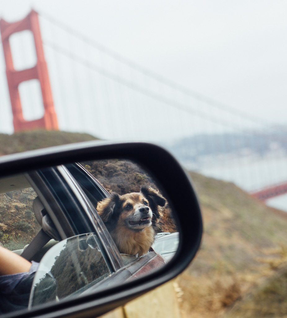 Public transportation allowing dogs in San Francisco, how to get around in San Francisco with your dog, dogs on public transit