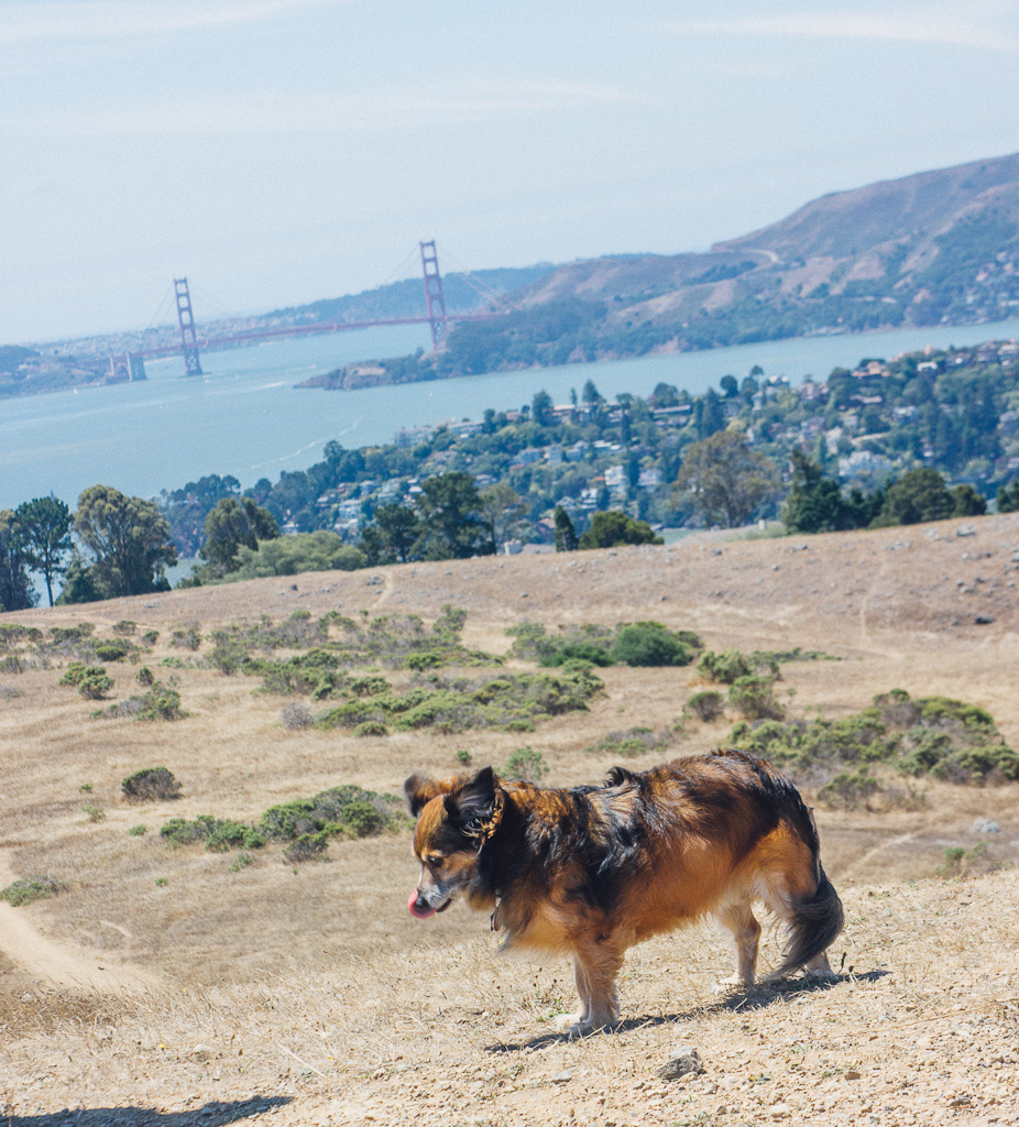 Hiking in San Francisco Bay Area with dogs