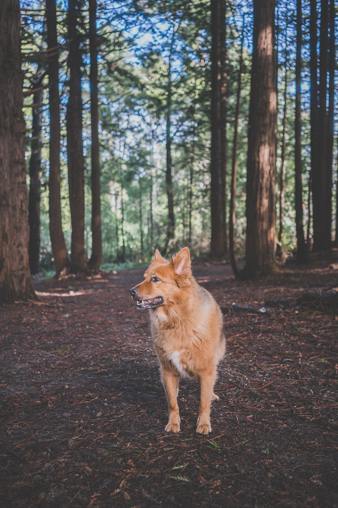 dog friendly hiking trails in Bay Area, Bay Area hikes with dogs