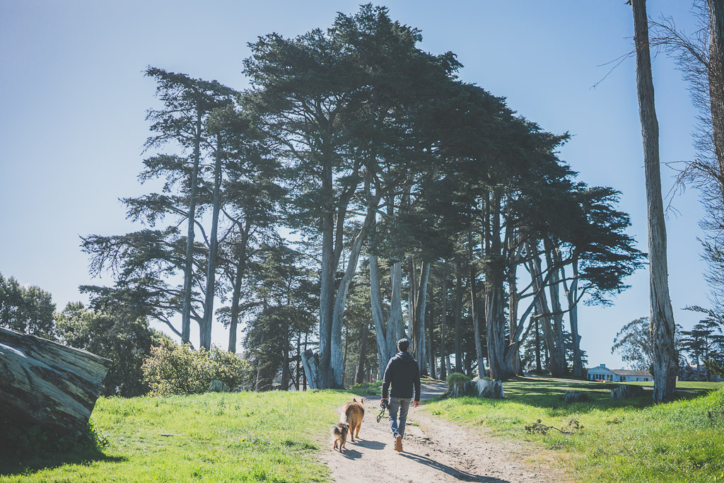 Lincoln Park in San Francisco, what to do with your dog in San Francisco