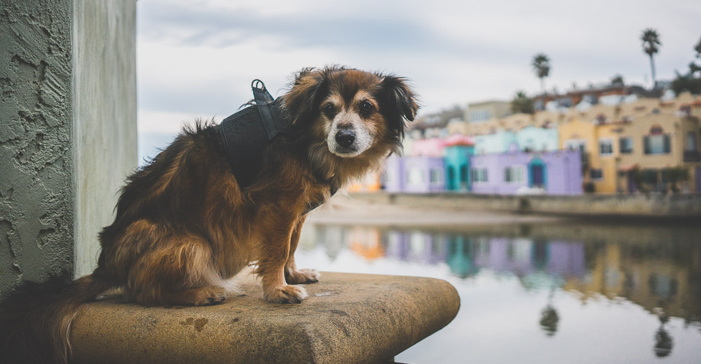 dog friendly trip to Capitola near Santa Cruz