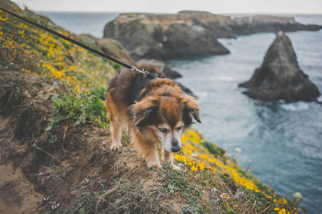 mendocino is a great stop on a dog friendly road trip in California