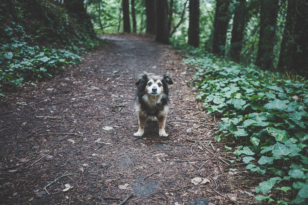 the enchanted trail is a dog friendly hiking trail in Santa Cruz