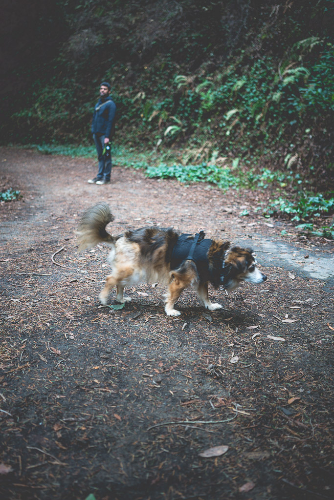 dog friendly hike in Santa Cruz, enchanted trail in DeLaveaga Park