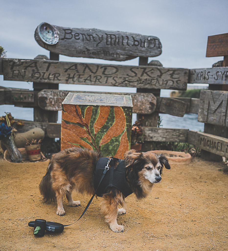 Dog friendly guide to Santa Cruz