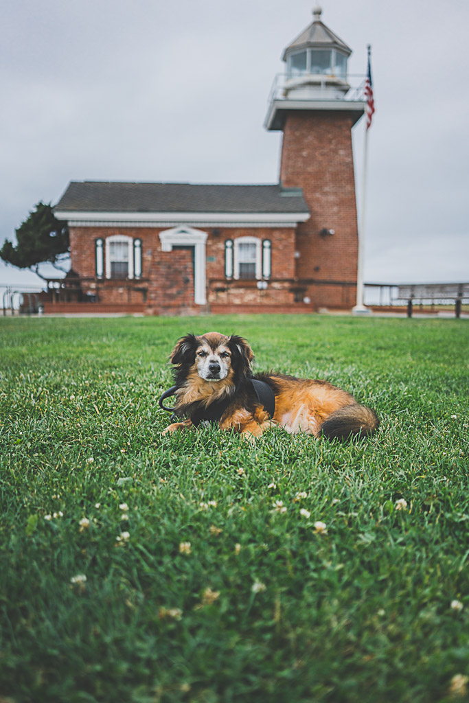 Lighthouse field state beach and park welcomes dogs in Santa Cruz