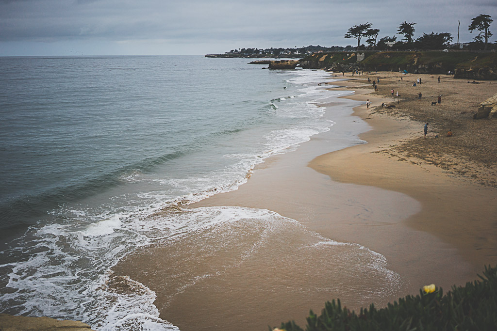 where to take your dog in Santa Cruz, dog friendly beach