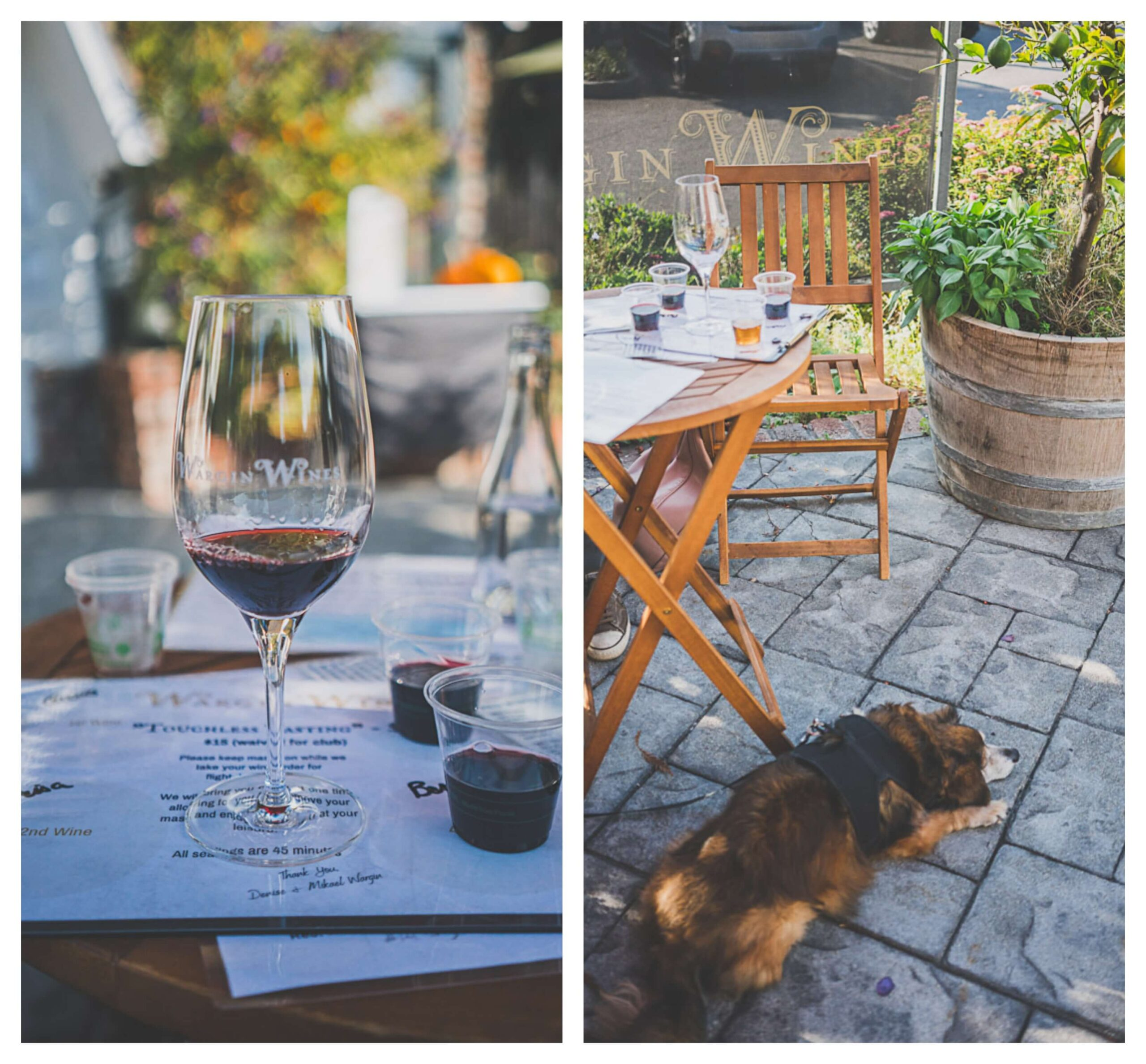 dog friendly wine tasting in Santa Cruz at Wargin winery
