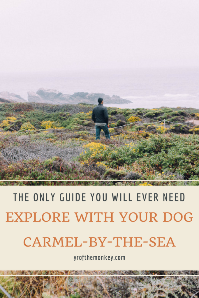 Dog Friendly Carmel: This is a dog friendly guide to Carmel by the Sea, a European town in California which is super welcoming to dogs. Read this guide for all dog friendly activities and complete list of dog friendly restaurants. Pin it to your Pet travel board today! #dogfriendlytravel #travelwithdogs #california