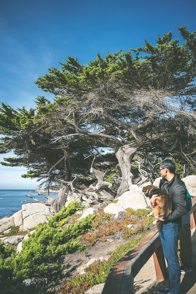 17 mile drive, dog friendly west coast road trip