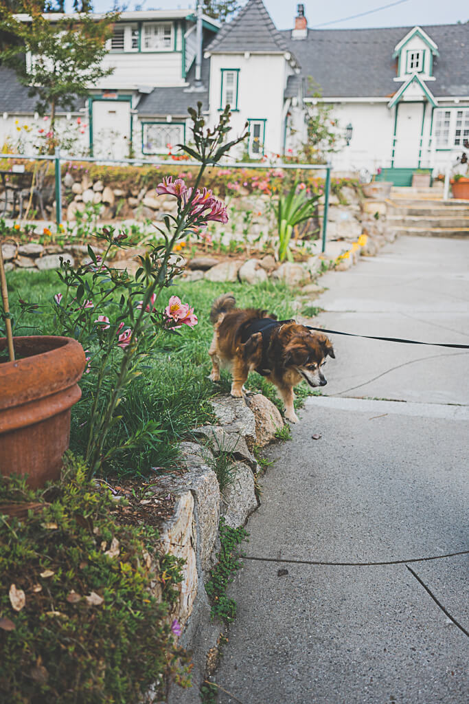 dog friendly Carmel hotels, where to stay with your dog in Carmel