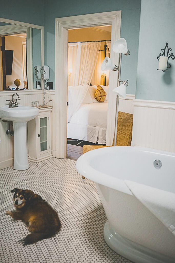 hotel Napa Valley, dog friendly hotels in Napa