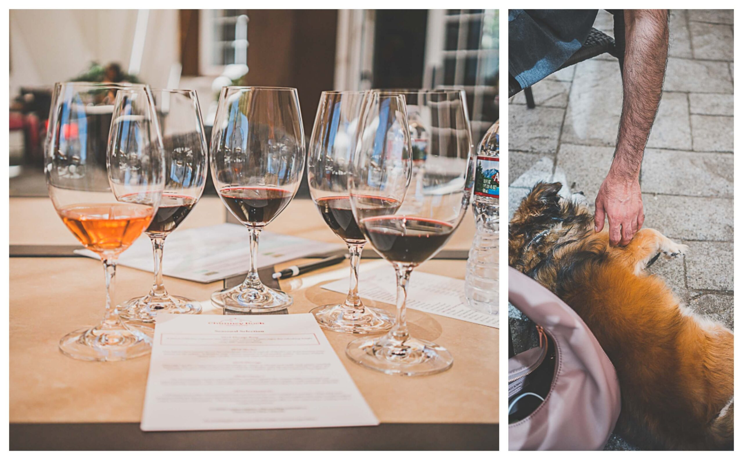Chimney rock winery, dog friendly winery in Napa
