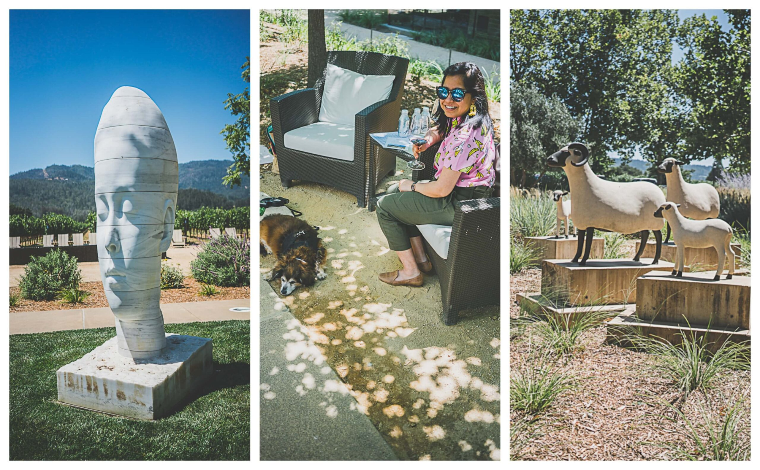 dog friendly wine tasting, Napa valley wineries, Hall winery at St Helena