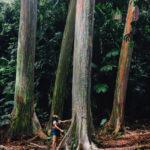 Hana travel Hawaii Maui Nature