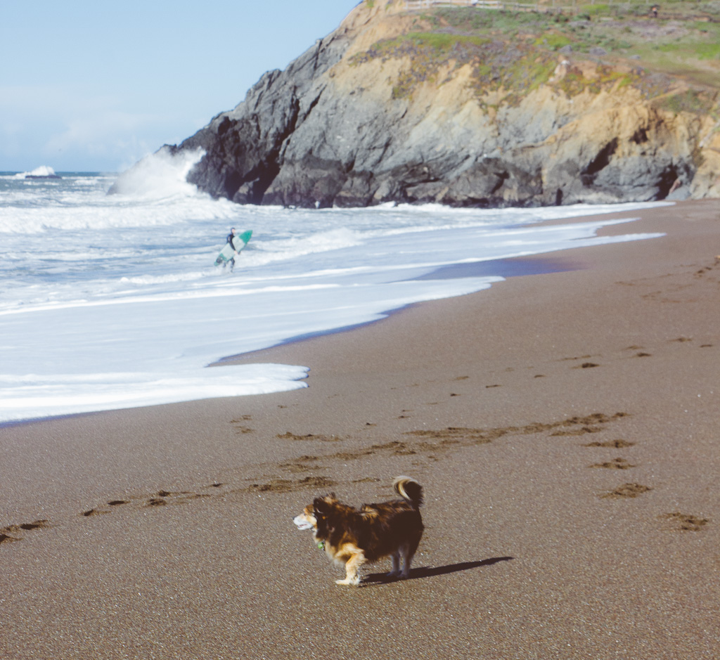 coastal trail starting from Rodeo Beach in Sausalito is a dog friendly hiking trail in Marin headlands
