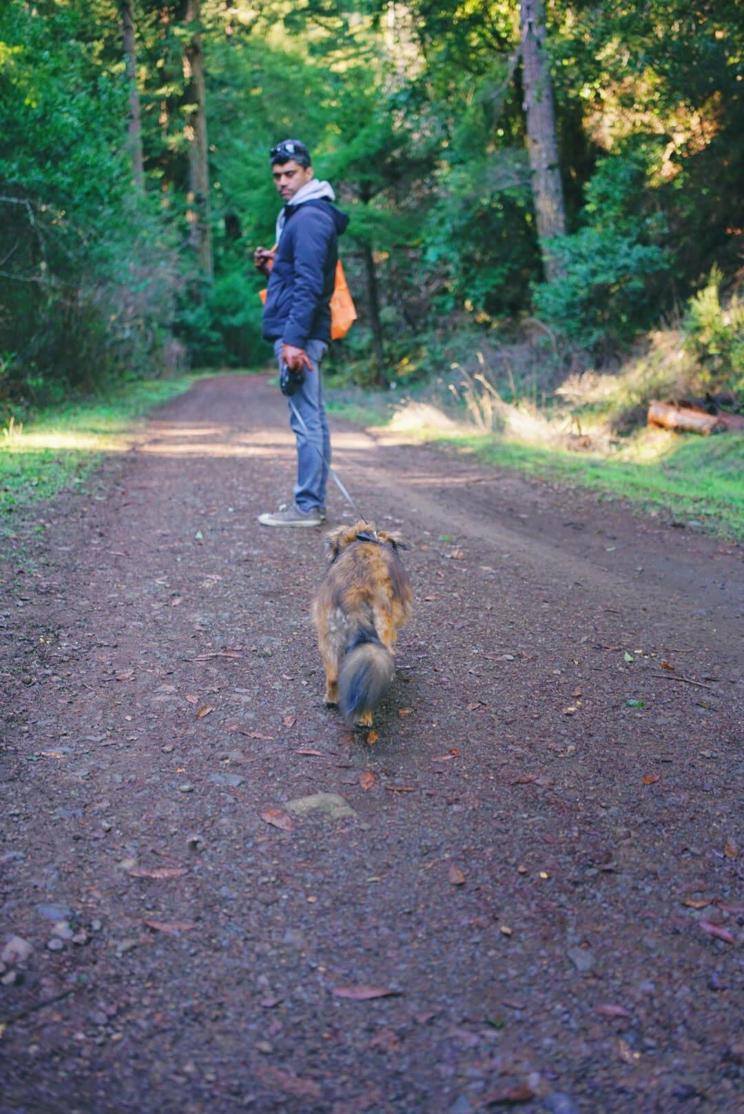 Cross marin trail is a dog friendly hiking trail in Lagunitas