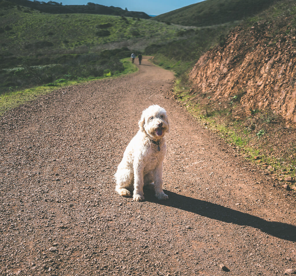 Dog friendly hiking in Bay Area: Miwok Trail in Marin headlands