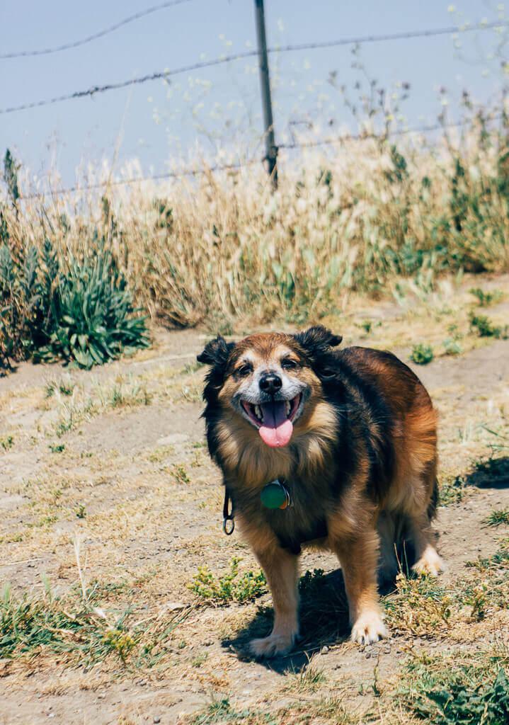 Tilden Regional Park East Bay has dog friendly hiking trails