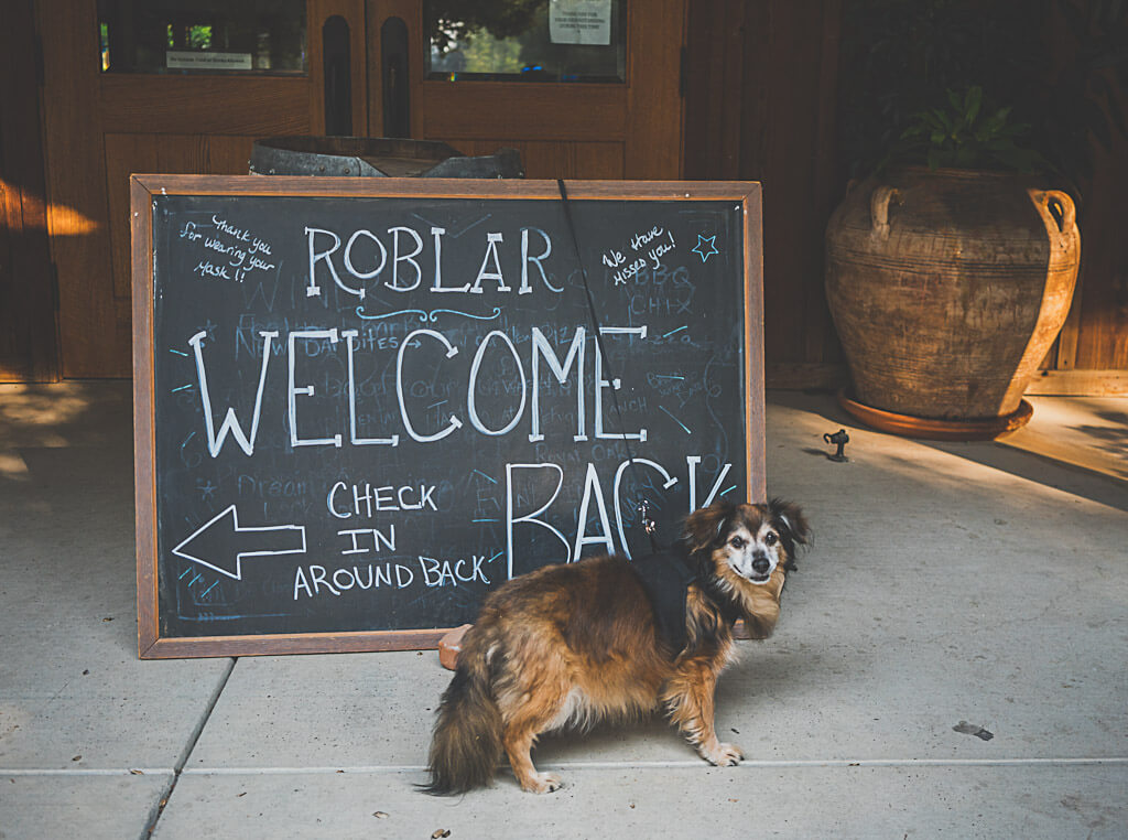 dog friendly wine tasting at Roblar Winery, santa Ynez valley