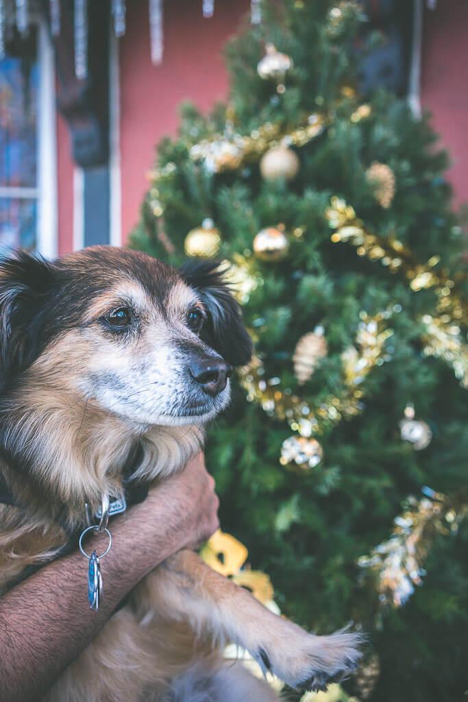dog friendly hotels in solvang