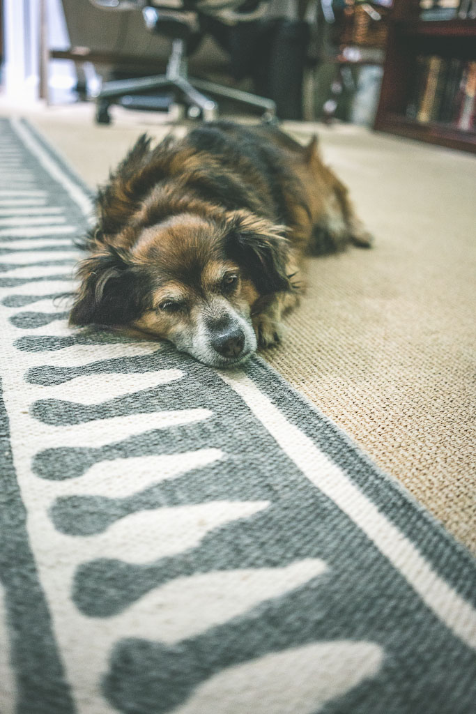 the best dog friendly things to do in San Francisco