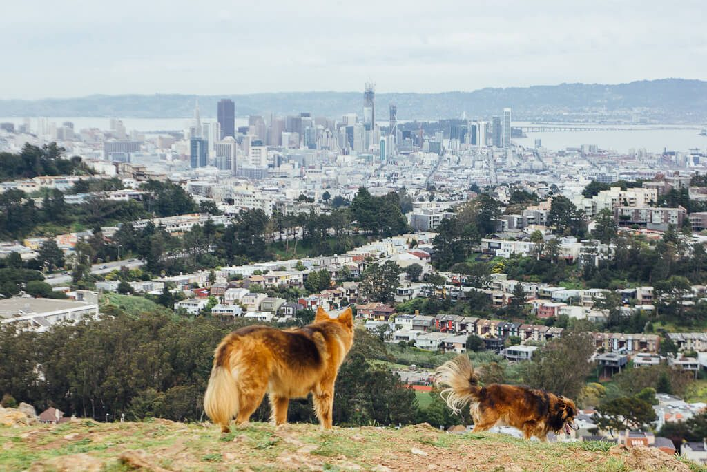 dog friendly cities in US, most dog friendly cities in America, dog friendly cities of USA, American cities which welcome dogs, where to take your dog in USA, San Francisco is a dog friendly city