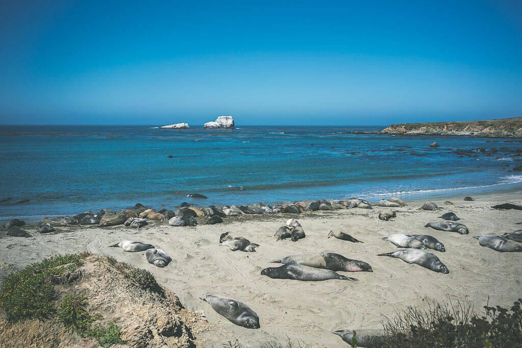 Elephant seal rookery in San Simeon, Big Sur road trip stops, Big Sur guide