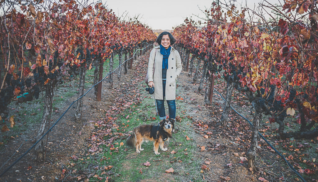 Dog friendly wine tasting at Sonoma winery, MacRostie Winery