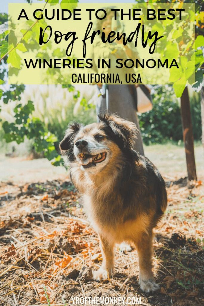 This is a guide to the best dog friendly wineries in Sonoma county, California, USA's premier wine destination. Read this guide to plan your dog friendly wine tasting at some of the prettiest wineries in Healdsburg and Kenwood where walk-ins are welcome. Pin this to your USA or pet travel board now! #winetasting #winecountry #california #USA #sonoma #dogfriendly #travelwithdogs #petfriendly
