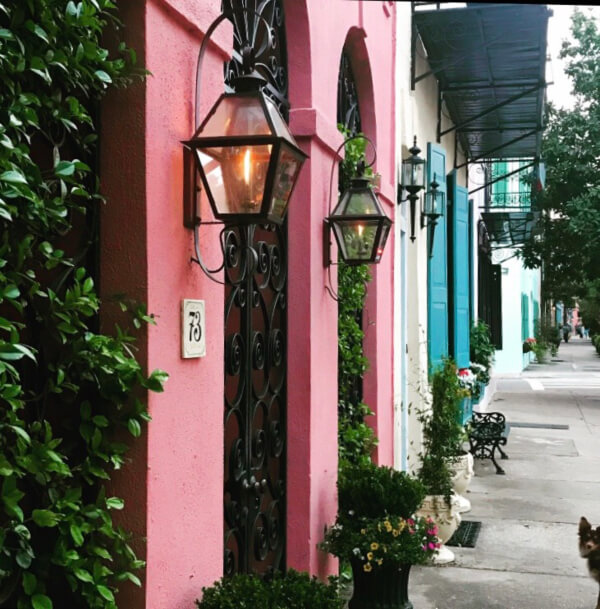 Most dog friendly cities in US, American cities that are dog friendly, dog friendly cities in USA, where to take your dog in USA, dog friendly charleston