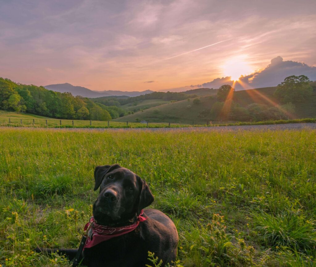 Most dog friendly cities in US, American cities that are dog friendly, dog friendly cities in USA, where to take your dog in USA, dog friendly Blowing Rock, North Carolina