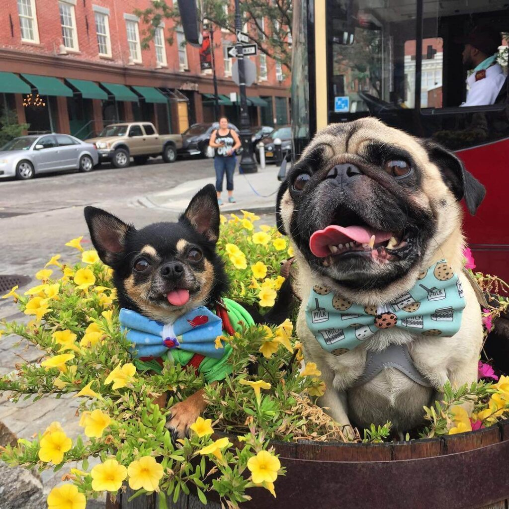 Most dog friendly cities in US, American cities that are dog friendly, dog friendly cities in USA, where to take your dog in USA, dog friendly New York city