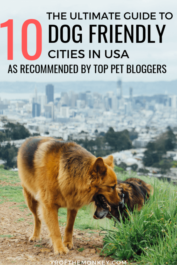This is a complete guide to the top 10 most dog friendly cities in US, as picked by travel savvy pet parents. Includes details on dog friendly hotels, restaurants and activities from the west to the east coast. Pin it to your USA or pet travel board now! #dogfriendly #travelwithdogs #USA #dogfriendlycities #petfriendltravel #petfriendly #dogfriendlyrestaurants #dogfriendlyhotels #dogparks #hikingwithdogs #dogfriendlybeaches