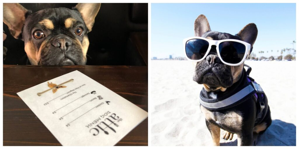 Most dog friendly cities in US, American cities that are dog friendly, dog friendly cities in USA, where to take your dog in USA, dog friendly long beach