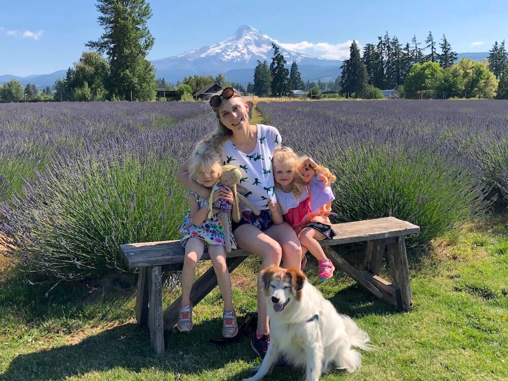 The beautiful lavender fields in USA, Lavender valley Oregon which is a dog friendly lavender field
