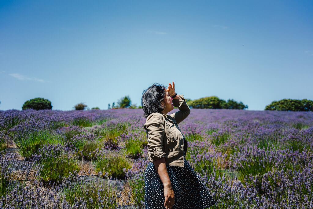 Lavender farms and fields in California-Monte Bellaria in Sonoma